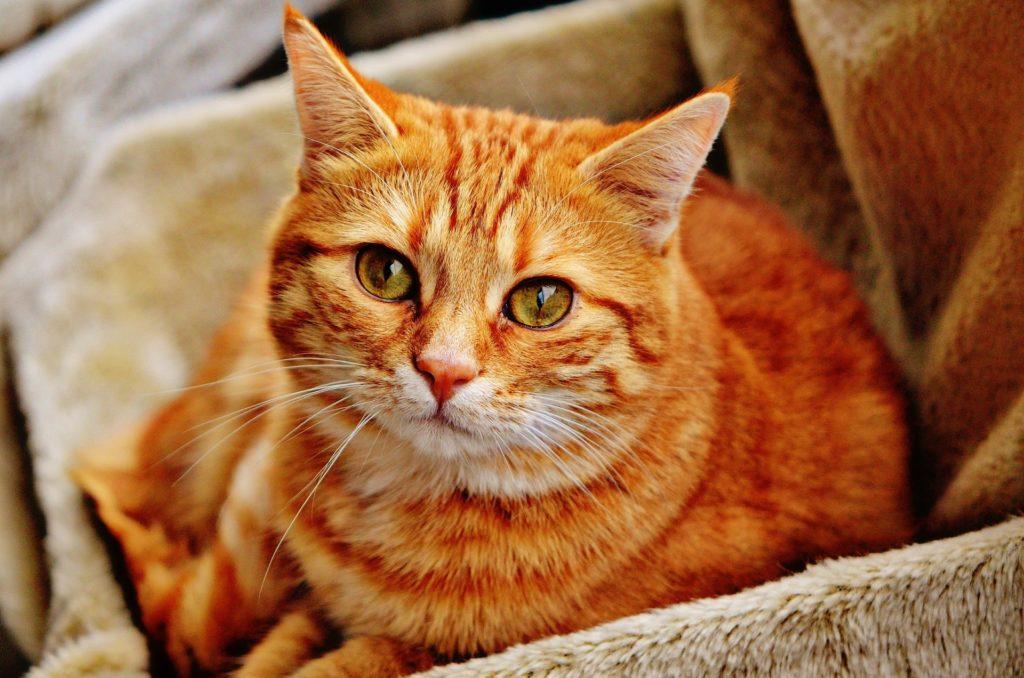 Kein Lebensmittel-Discounter-Katzenfutter
