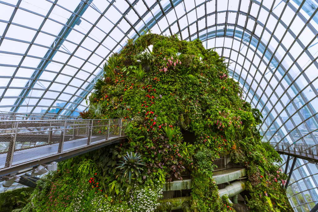 A highlight of human engineering: the summit in the greenhouse Cloud Forest.
