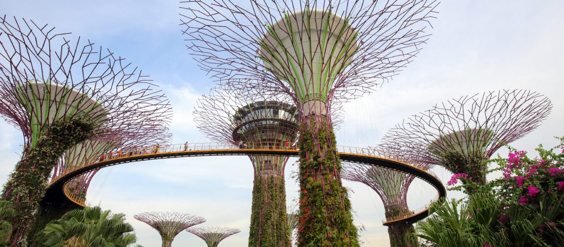The Supertrees in Singapur.