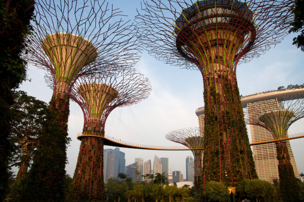 The Supertrees represent a habitat in which humanity connects nature with technology.