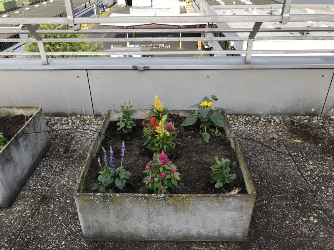 The newly created Rooftop Garden with an irrigation system from NORMA Group was one of my topics for an intranet article.
