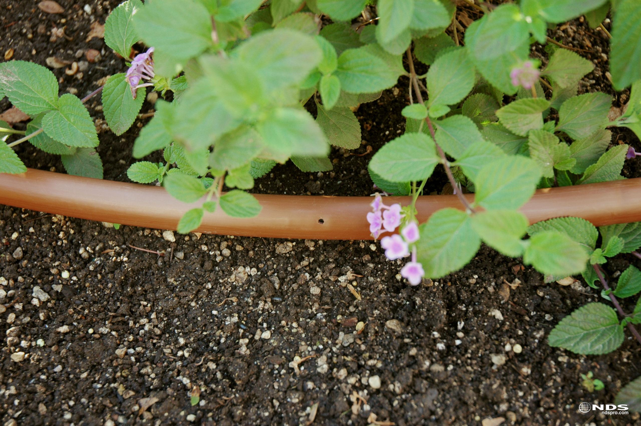 Eine Tropfleitung für eine effiziente und ressourcenschonende Bewässerung