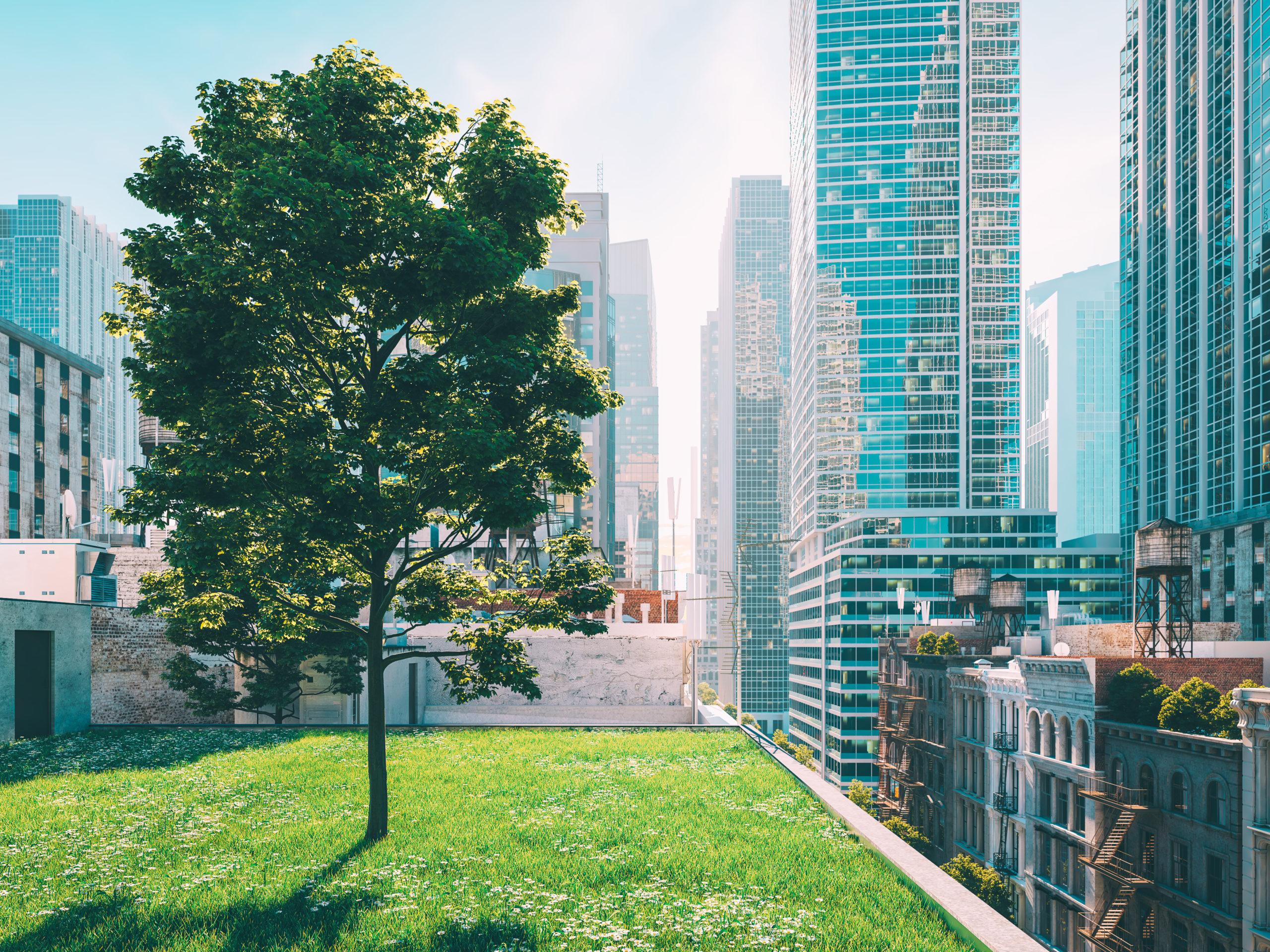 Begrünte Dächer in Städten