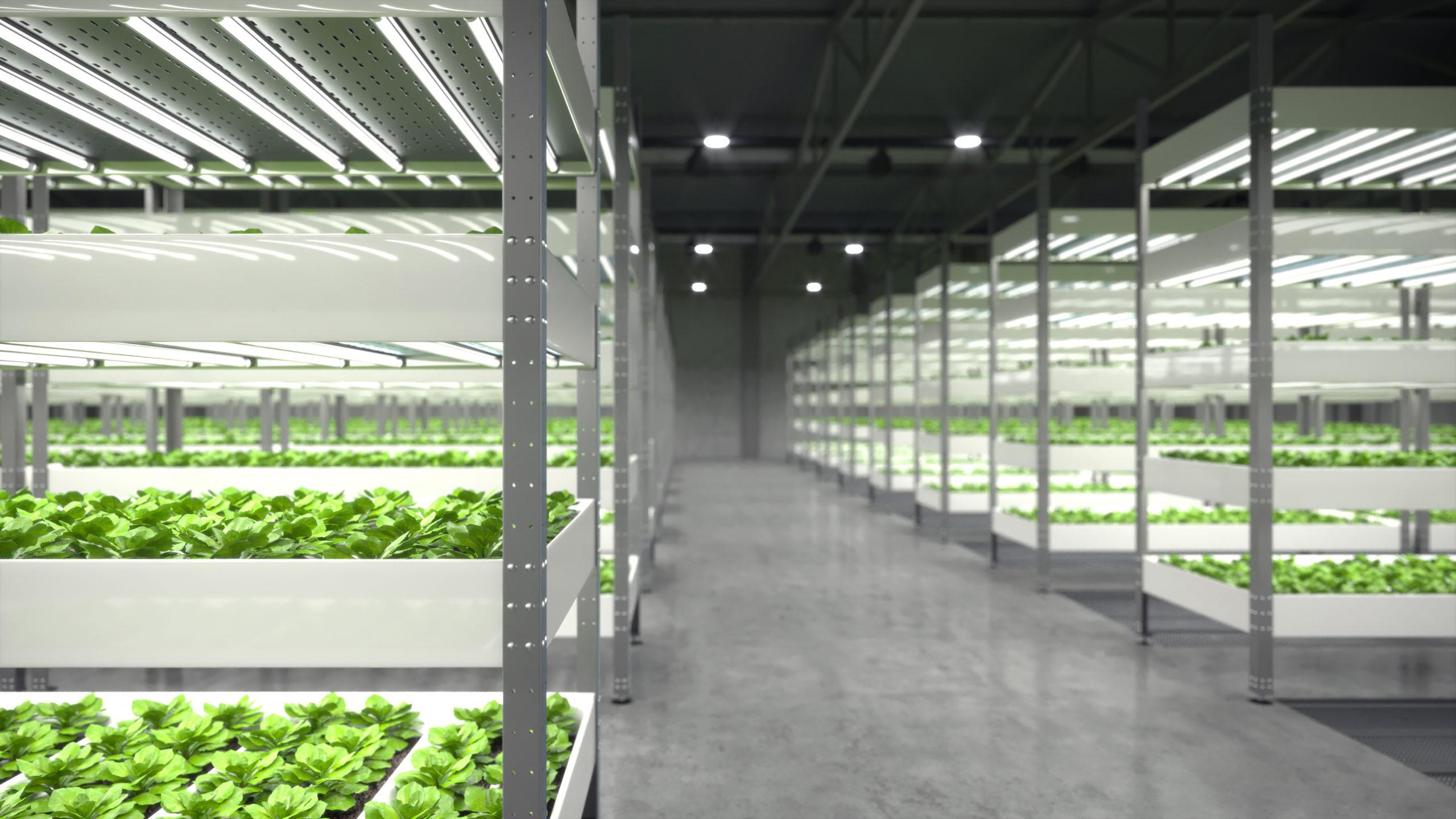 Vertikale Landwirtschaft